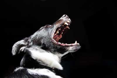 犬の夜鳴きイメージ