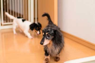 シニア犬の健康管理-室内レイアウト