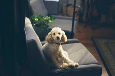 犬の寿命が縮む生活環境