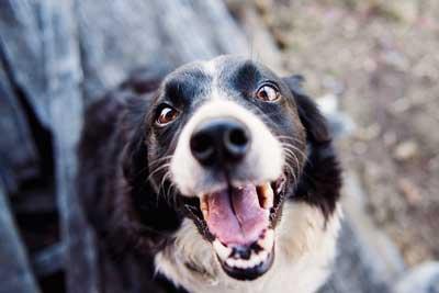 犬の口のイメージ