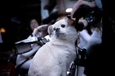 肥満犬イメージ