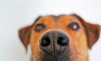 犬の鼻イメージ