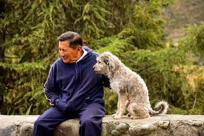 老犬とお散歩