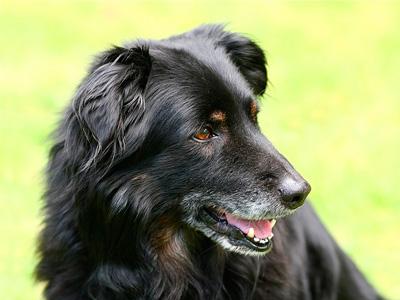 シニア犬イメージ