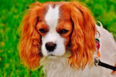 散歩嫌いの高齢犬イメージ