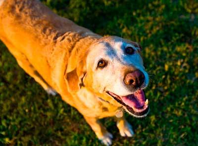 うれしいシニア犬