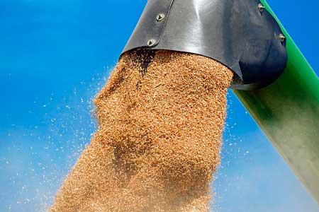 ドッグフードの穀物の必要性