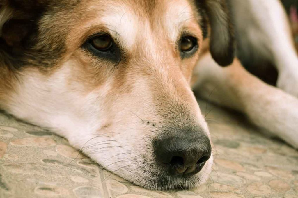 元気のない犬