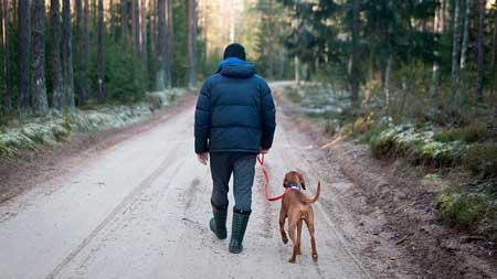 犬の花粉症におすすめの早朝散歩