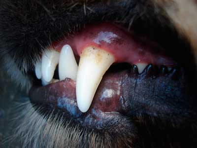 犬の歯石対策グッズ