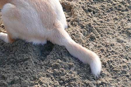 犬のお尻歩きの原因は病気?