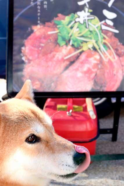 高齢犬に生肉を与える正しい方法