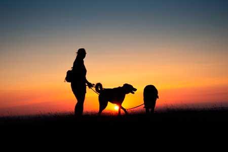 夏の犬の散歩は早朝か夕方以降がおすすめ