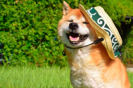 真夏日や猛暑日の犬の散歩の安全な方法