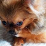 ストレスで足を舐める犬
