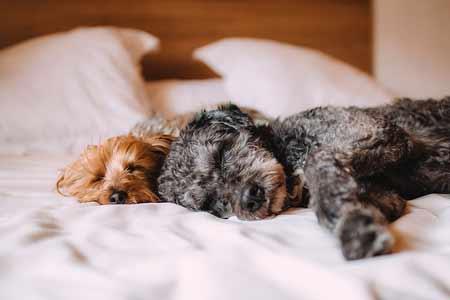 エアロウィーブ犬用マサルスペシャルとエアロウィーブの違いとオススメ