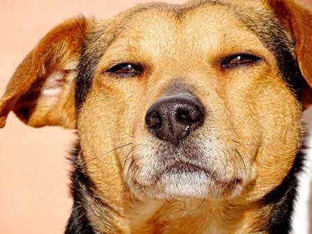 エアウィーブを高齢犬に使う時注意すること