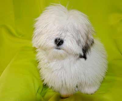 高齢犬のパサパサ被毛の艶を蘇らせるオイル3種類
