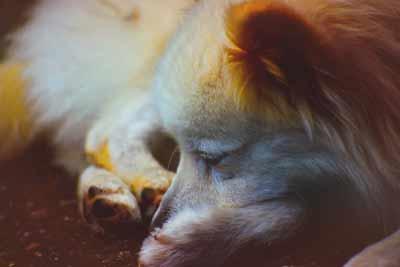 老犬の昼夜逆転生活を解決し寝不足から解消される方法は?