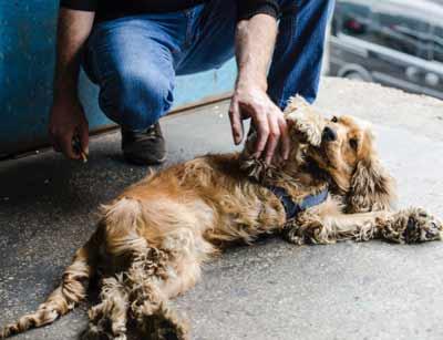 老犬の昼夜逆転生活改善には日光浴と散歩