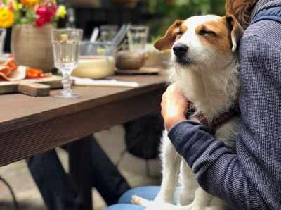 犬の認知症にはコミュニケーションが大切