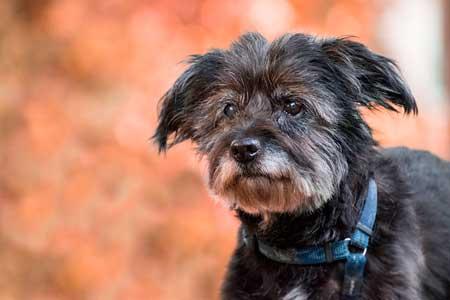 高齢犬はペット保険に加入すべき?