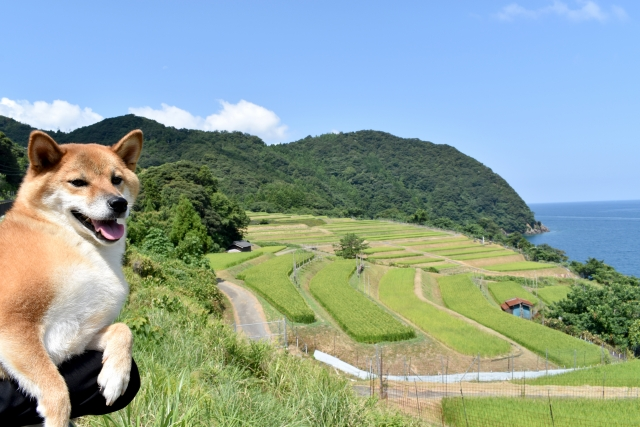 犬が田んぼや農業用水路の水を飲んじゃった!健康への影響は?