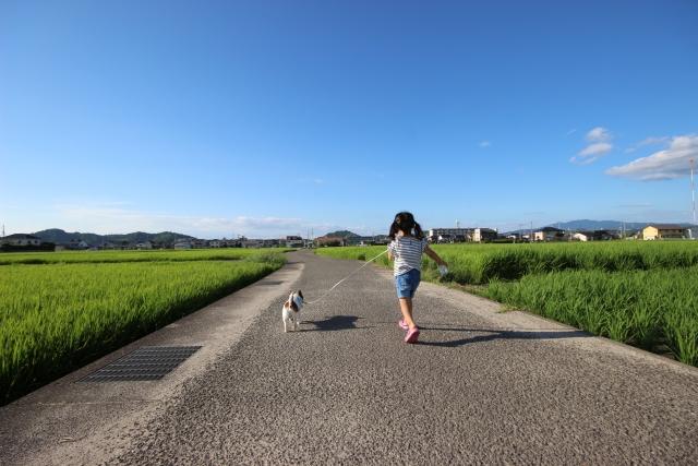 愛犬に田んぼや用水路の水を飲まさないための工夫