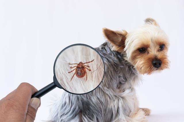 犬の虫刺されに人間用のかゆみ止めを使っても大丈夫?