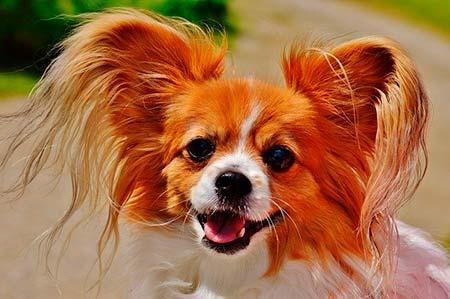 ピッコロドッグフードは小型シニア犬用?