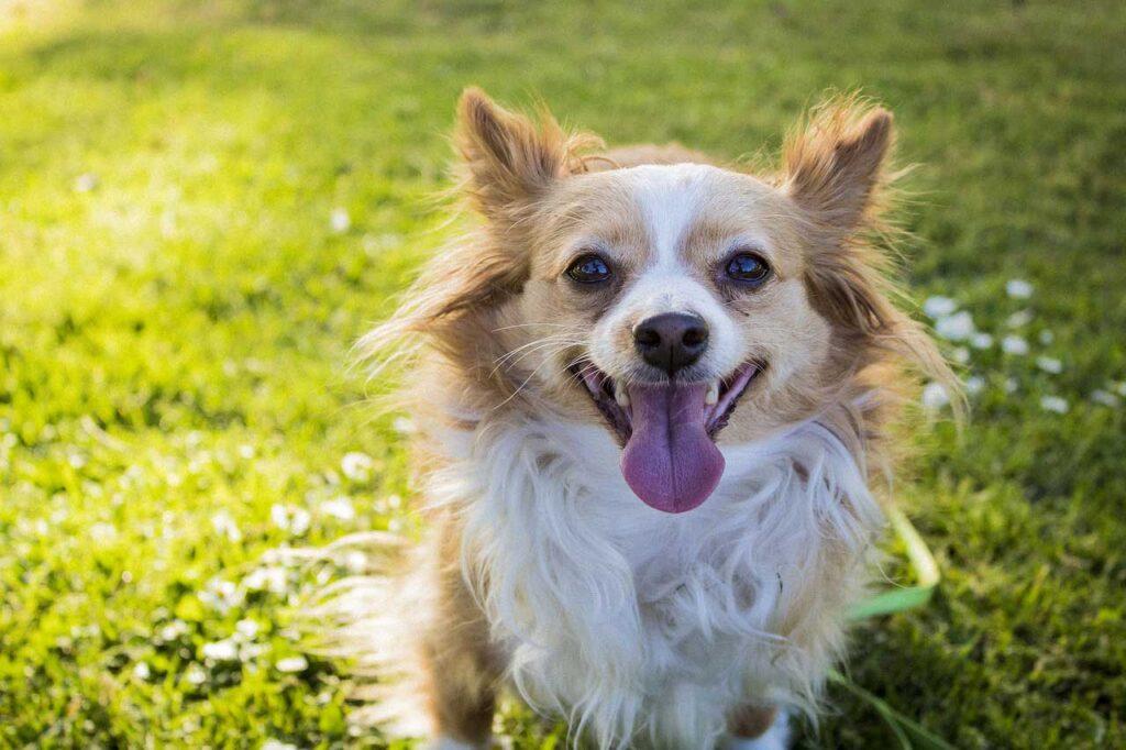 長寿のための生活習慣  カナガンにシニア犬用は無い?カナガンから切り替えるべきシニアフードはこれ