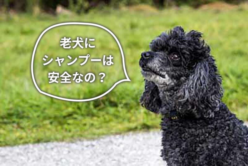 老犬のシャンプー頻度や適切なトリミング方法は?