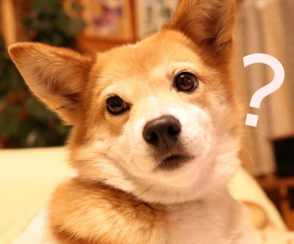 歯磨きを嫌がる成犬老犬の口臭対策グッズおすすめは?食べるジェルがベスト