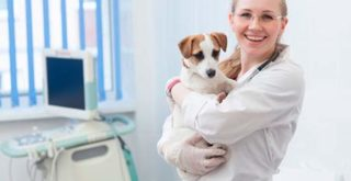 ロイヤルカナンを獣医師がおすすめする理由